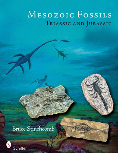 Mesozoic Fossils Triassic and Jurassic: Stinchcomb, Bruce L.