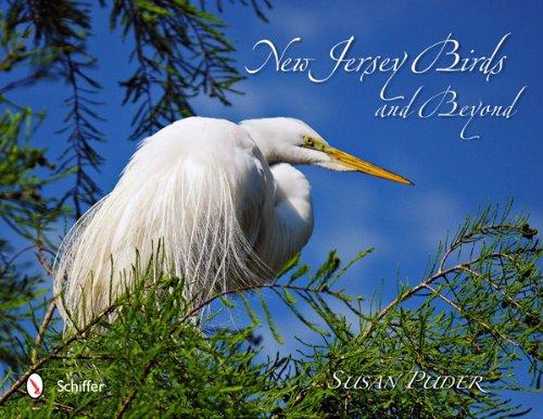 New Jersey Birds and Beyond: Puder, Susan