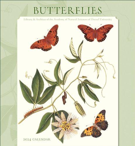 9780764964442: Butterflies 2014 Calendar