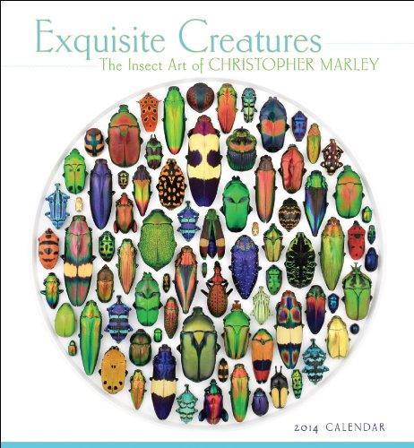 Exquisite Creatures 2014 Calendar: Marley, Christopher