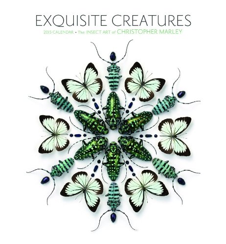 9780764966606: Exquisite Creatures 2015 Calendar: The Insect Art of Christopher Marley