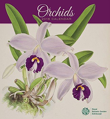 9780764970627: Orchids 2016 Calendar