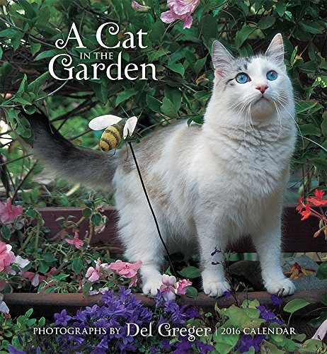 9780764970818: A Cat in the Garden 2016 Wall Calendar