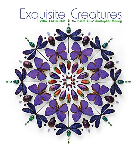 9780764970979: Exquisite Creatures 2016 Calendar: The Insect Art of Christopher Marley