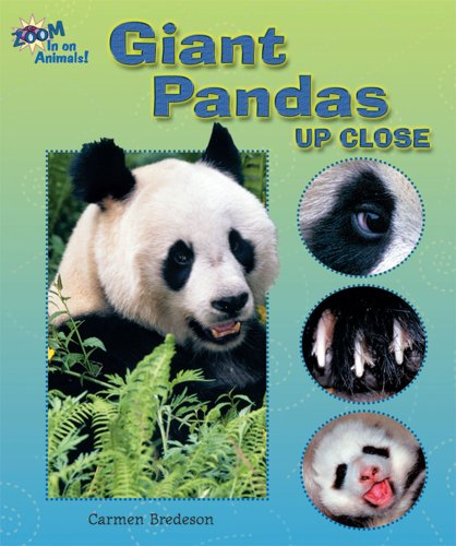 9780766024960: Giant Pandas Up Close (Zoom in on Animals!)
