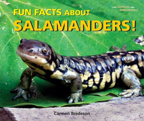 9780766027909: Fun Facts About Salamanders! (I Like Reptiles and Amphibians!)