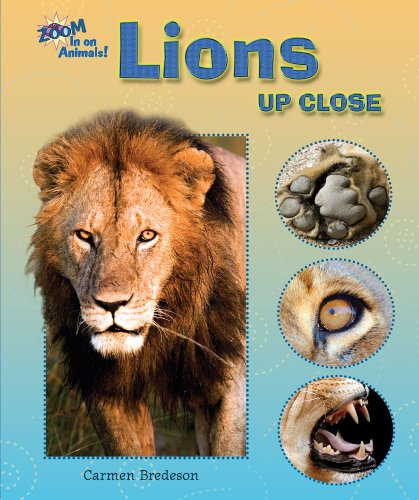 Lions Up Close (Zoom in on Animals!) (9780766030800) by Carmen Bredeson