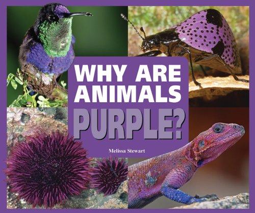 9780766032545: Why Are Animals Purple? (Rainbow of Animals)