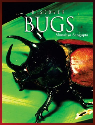 9780766034723: Discover Bugs (Discover Animals)