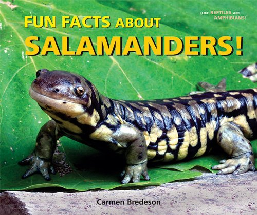 9780766035973: Fun Facts About Salamanders! (I Like Reptiles and Amphibians!)
