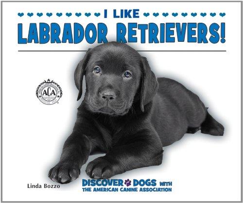 9780766038486: I Like Labrador Retrievers! (Discover Dogs with the American Canine Association)