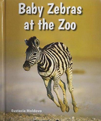 Baby Zebras at the Zoo (Library Binding): Eustacia Moldovo