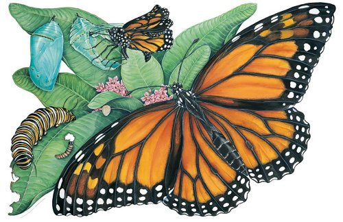 9780768216370: Metamorphosis of a Butterfly Floor Puzzle (Frank Schaffer Giant Floor Puzzles)