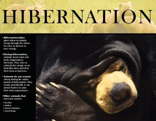 9780768236019: Hibernation Survival Skills in the Animal World Cheap Chart (Cheap Charts)