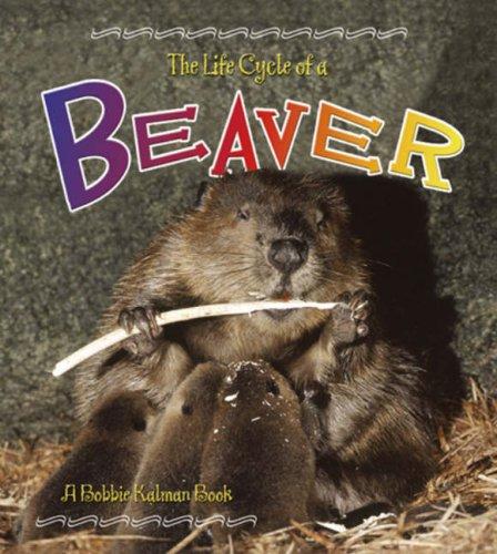 Beaver (Life Cycle of A.(Library)): Kalman, Bobbie