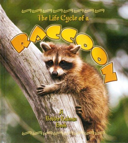 The Life Cycle of a Raccoon: Bobbie Crossingham Kalman