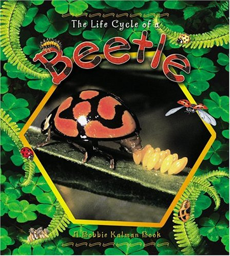 9780778706625: The Life Cycle of a Beetle