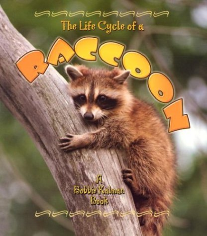 9780778706915: The Life Cycle of a Raccoon