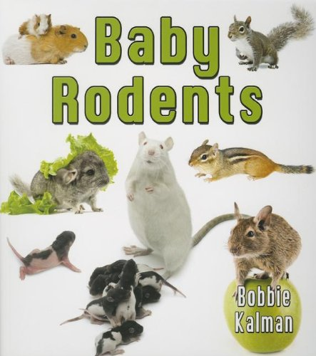 9780778710141: Baby Rodents (It's Fun to Learn about Baby Animals (Paperback))
