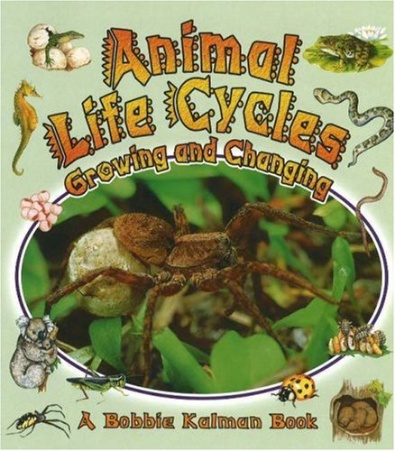 9780778723127: Animal Life Cycles: Growing and Changing (Nature's Changes)