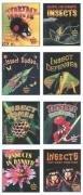World of Insects Series (Hardback): Bobbie Kalman