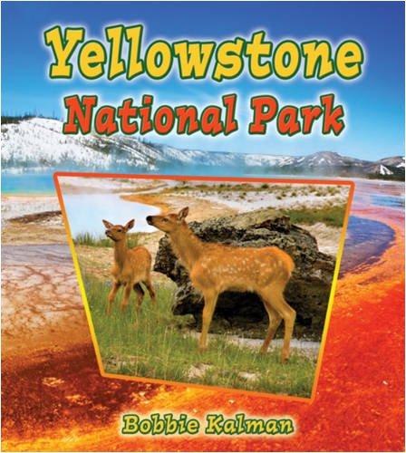 9780778729617: Yellowstone National Park (Introducing Habitats)