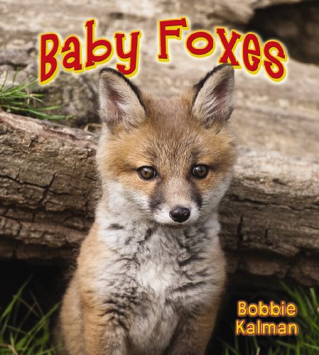 Baby Foxes (It's Fun to Learn about Baby Animals (Library)): Bobbie Kalman