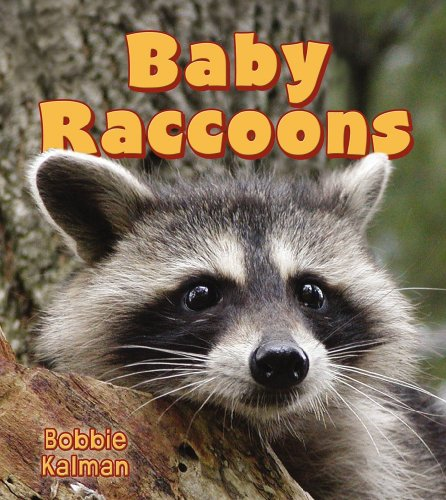 9780778739821: Baby Raccoons (It's Fun to Learn About Baby Animals)