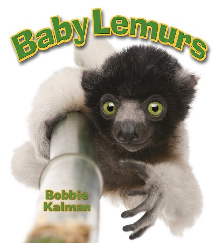9780778748939: Baby Lemurs (It's Fun to Learn About Baby Animals)