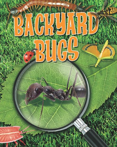 9780778778417: Backyard Bugs (Crabtree Connections)