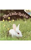 9780780788848: The Little Rabbit