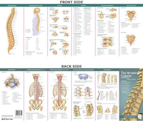 9780781776820: Anatomical Chart Company's Illustrated Pocket Anatomy: The Vertebral Column & Spine Disorders Study Guide