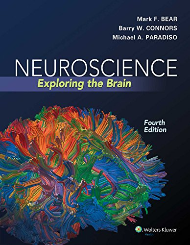 9780781778176: Neuroscience: Exploring the Brain, Fourth Edition by Mark F. Bear, Barry W. Connors, Michael A. Paradiso (2015) Hardcover