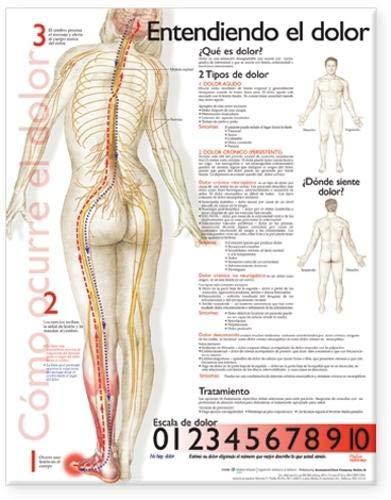 9780781782296: Understanding Pain Anatomical Chart in Spanish (Spanish Edition)