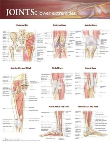 9780781786638: Joints: Lower Extremities