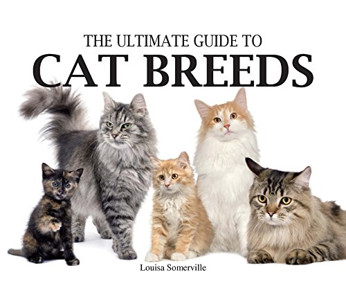 9780785822646: Ultimate Guide to Cat Breeds (Paperback Chunkies)