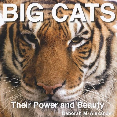 9780785824268: Big Cats: Their Power and Beauty