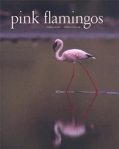 9780789206688: Pink Flamingos