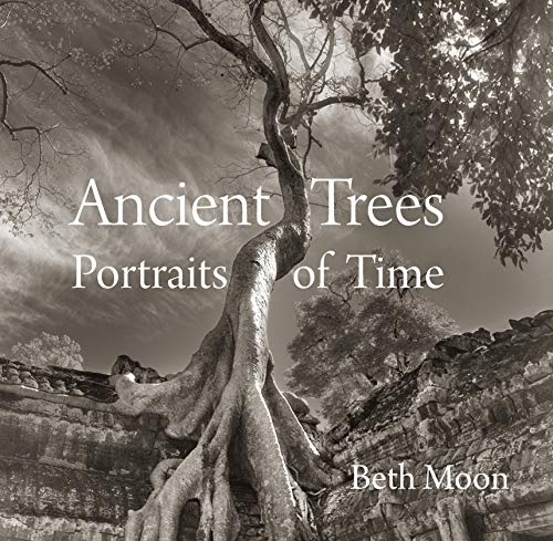 9780789211958: Moon, B: Ancient Trees: Portraits of Time