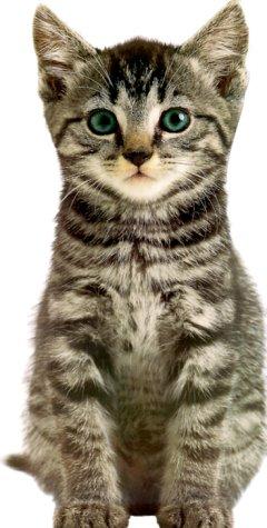 9780789454010: Jumbo Animal Shaped Board Book: Kitten