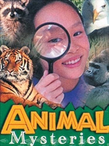 Animal Mysteries (Wildcats - Leopards) (B13): Maggie Bridger; Lee