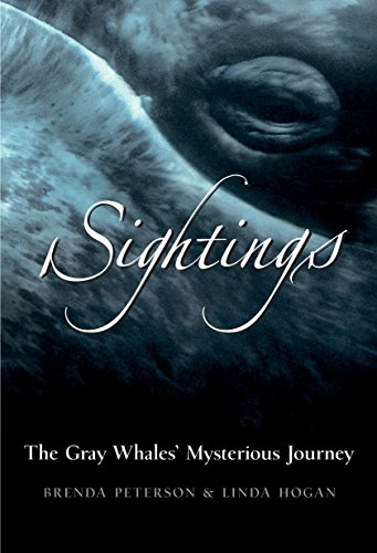 9780792241027: Sightings: The Gray Whales' Mysterious Journey
