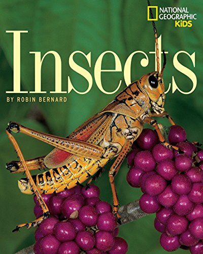 9780792266709: Insects