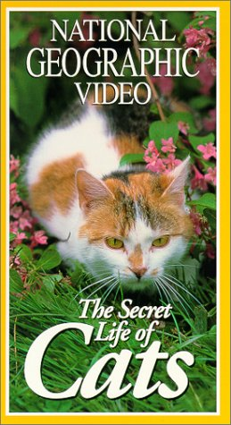 9780792296188: National Geographic's The Secret Life of Cats [VHS]
