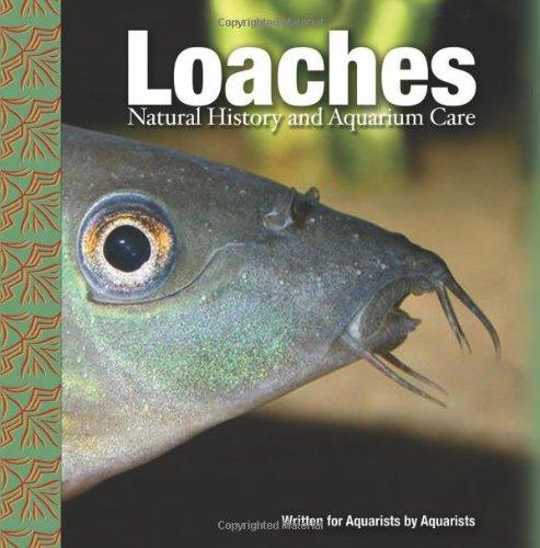 Loaches: Natural History and Aquarium Care: MacDonald, Mark [Editor]; Thoene, Martin [Editor];