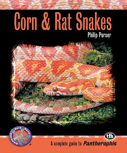 9780793828807: Corn & Rat Snakes (Complete Herp Care)