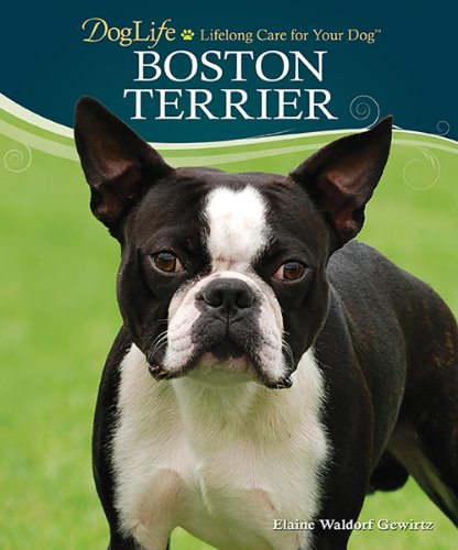 9780793836017: Boston Terrier