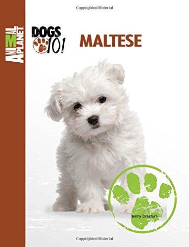 9780793837359: Maltese (Animal Planet: DOGS 101)