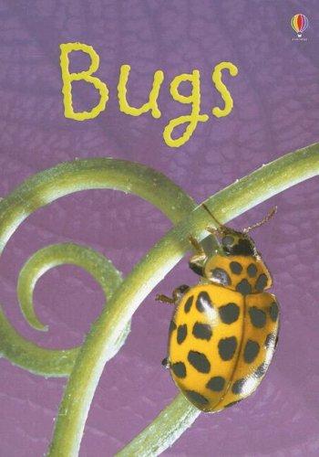 9780794517052: Bugs (Usborne Beginners)