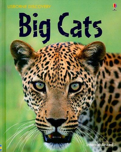 9780794522438: Big Cats (Usborne Discovery)